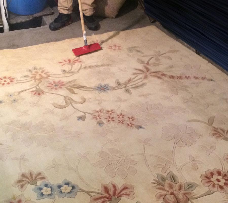UCM Carpet Cleaning Bellevue WA